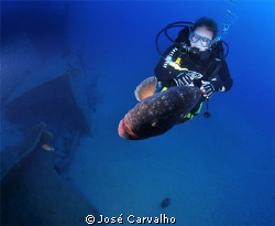 Diver playing with giant grouper - Madeirense wreck, Port... by Jos&#233; Carvalho 